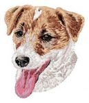 Jack Russell Terrier 14